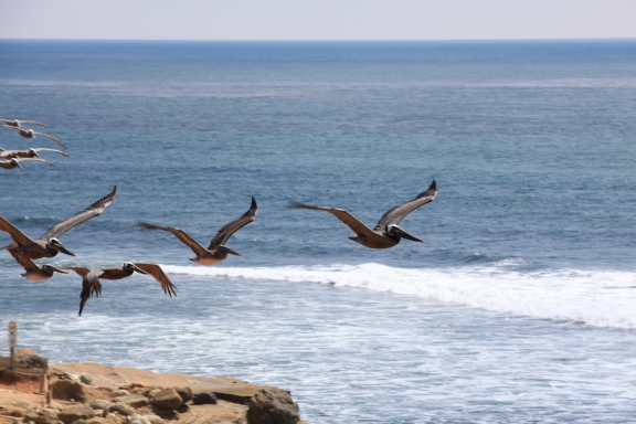 Birds flying along rocky cliffs at the ocean