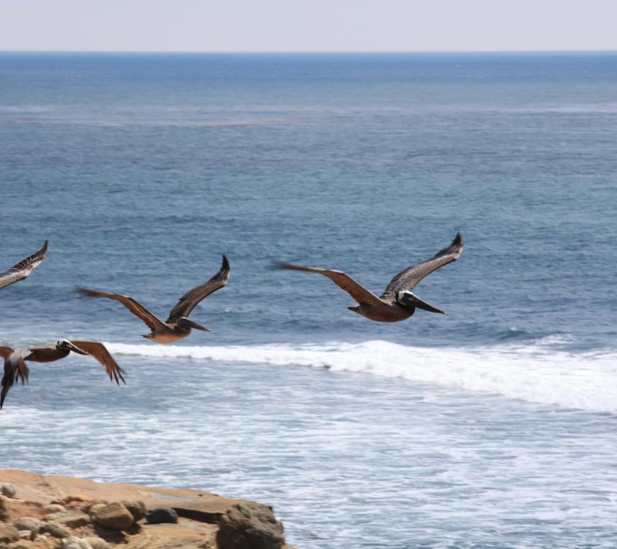 Birds flying along rocky cliffs at the ocean