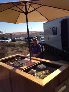Volunteer Becky manning the Tidepool Education Table