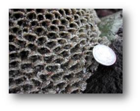 Sandcastle Worms