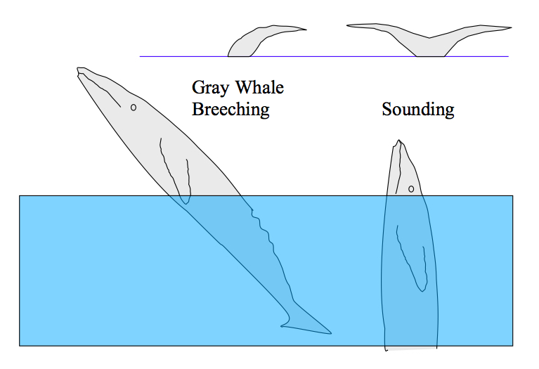 Whale Breathing