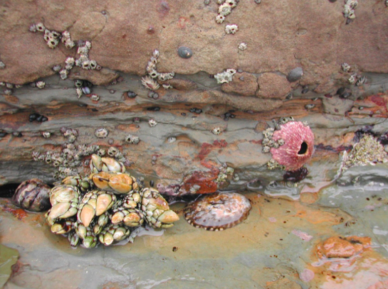 Competition in tidepools
