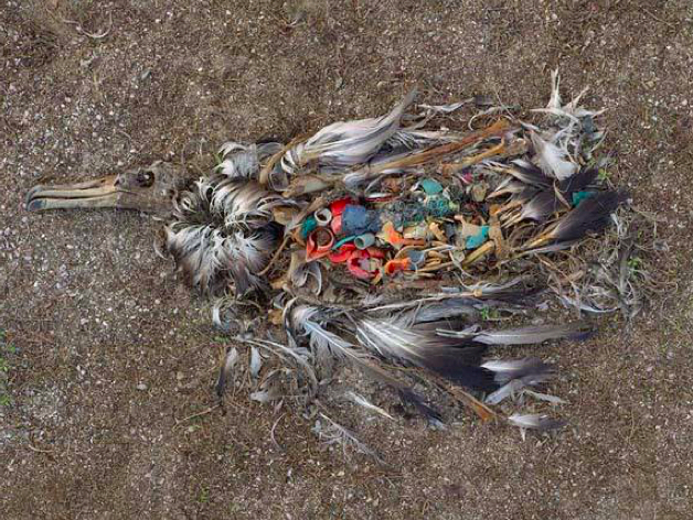 Garbage Patch and the Albatross