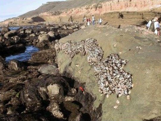 Lower Intertidal