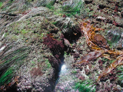 Middle Intertidal Zone