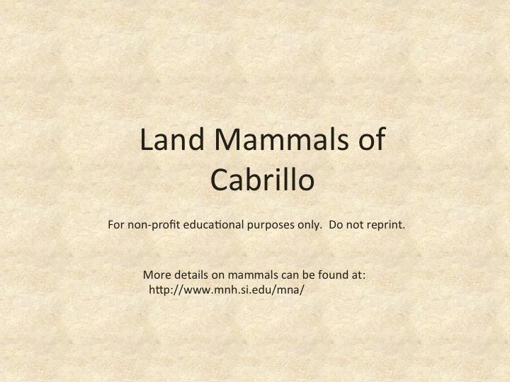 Land Mammals at CNM