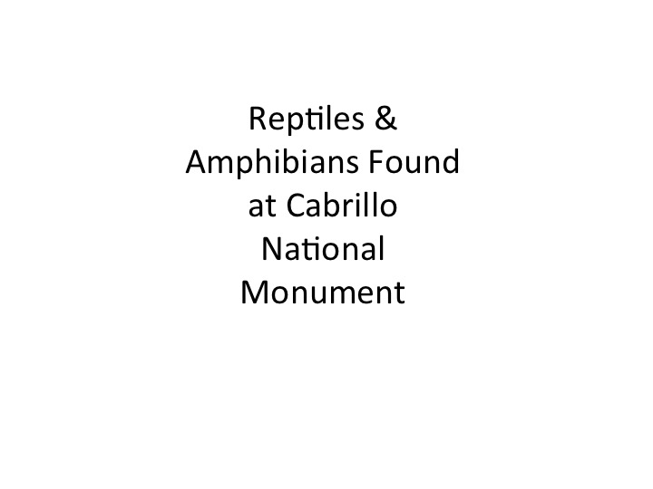 Reptiles and Amphibians at CNM