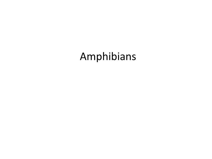 Amphibians at CNM