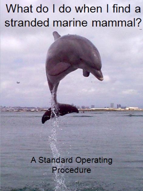 Marine Mammal Strandings