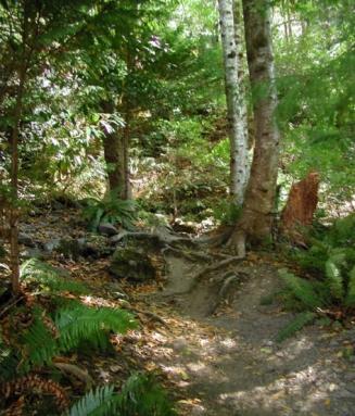 Terrestrial Forest