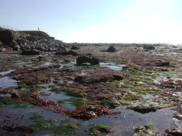 What are tidepools