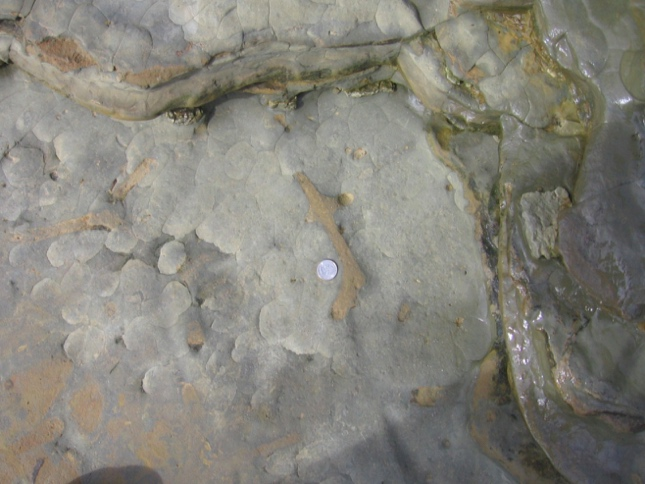 Trace Fossils of CNM