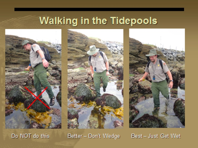 Walking In the Tidepools