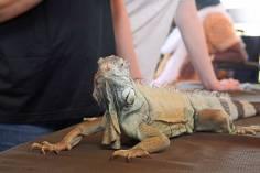 EcoVivarium reptile ambassadors