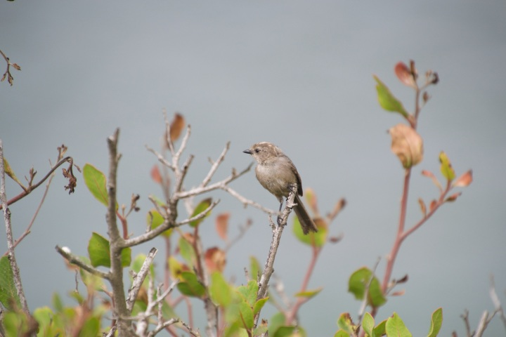 A small gray bird perched on top of a branch