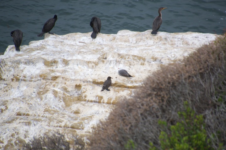 Large black birds sitting on a rock overlooking the ocean