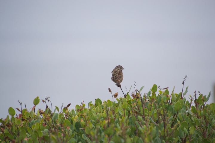 A small bird perched high on a branch of a bush