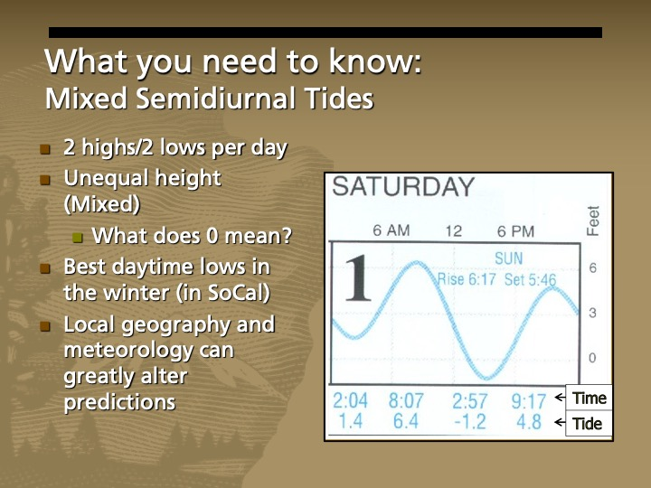 Graph with blue squiggly line showing two and two low tides for a single day. One high tide is higher and one is lower.