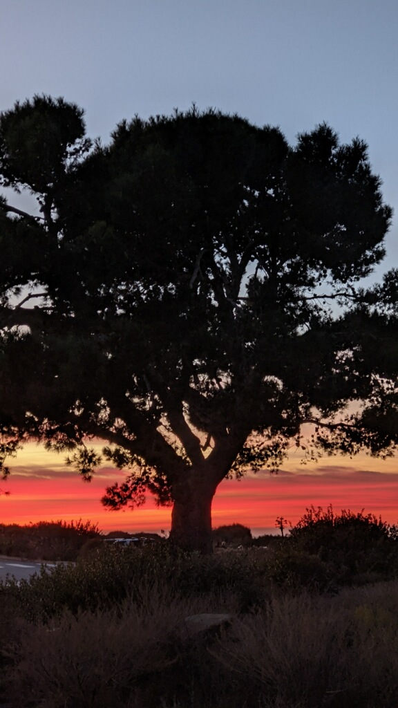 Tree in shadow with orange sky at sunset