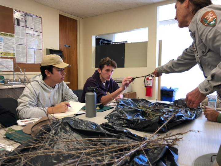 Ranger Lonie stands at a table that has two open black trash bags filled with dry brush on it. She hands a twig to apprentices Jackson and Eric who appear to inspect it carefully.