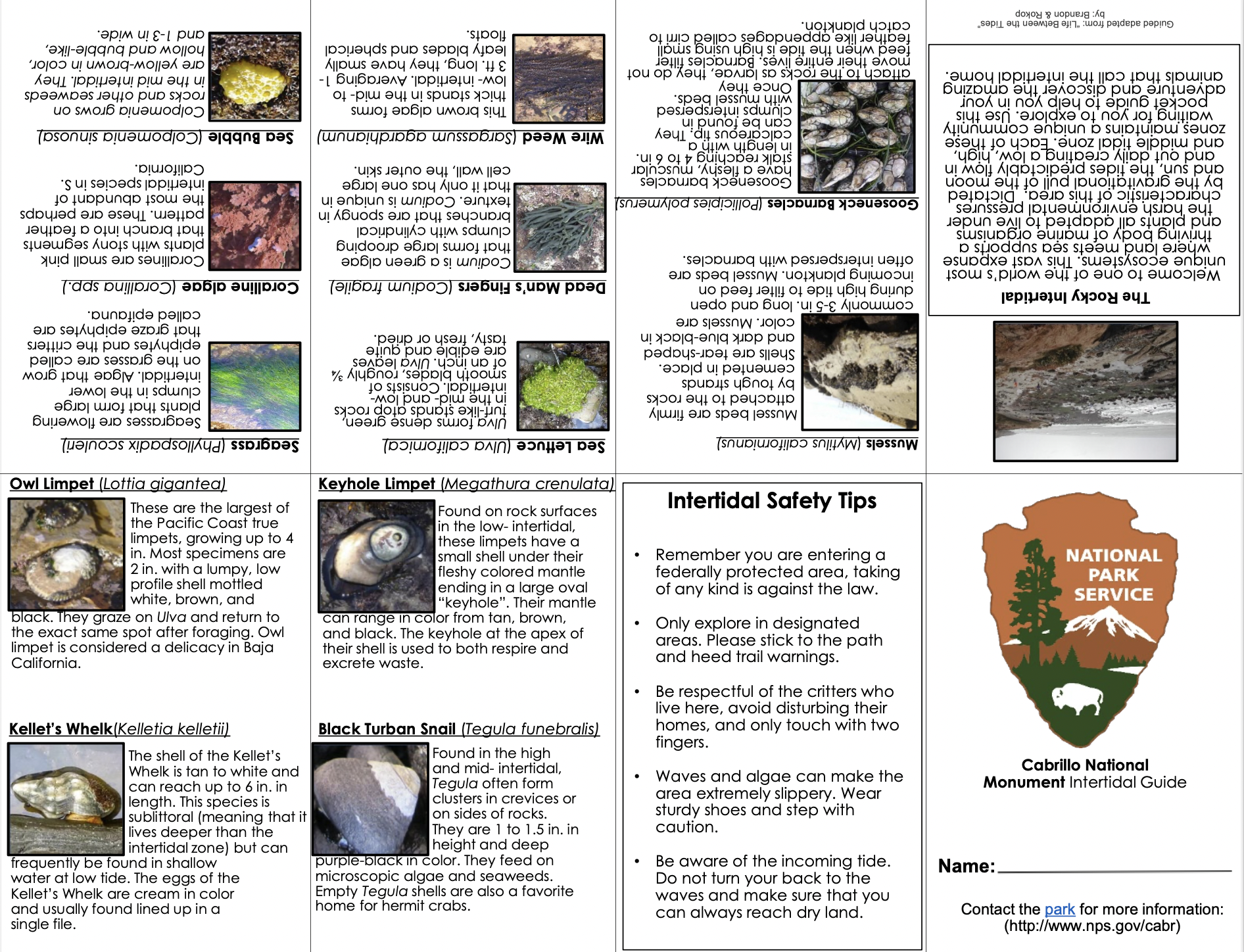 Text and images showing various animals in the tidepools