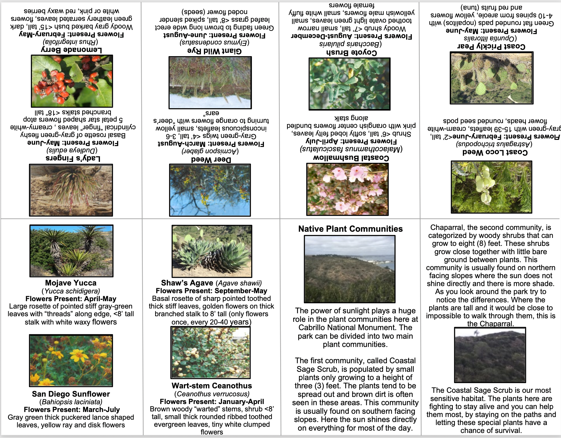 Text and images showing various plants at Cabrillo