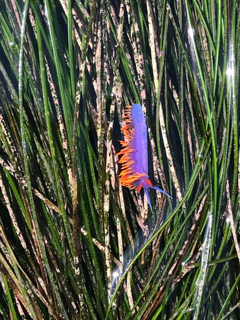 A purple cylinder with orange spikes on long green blades of grass.