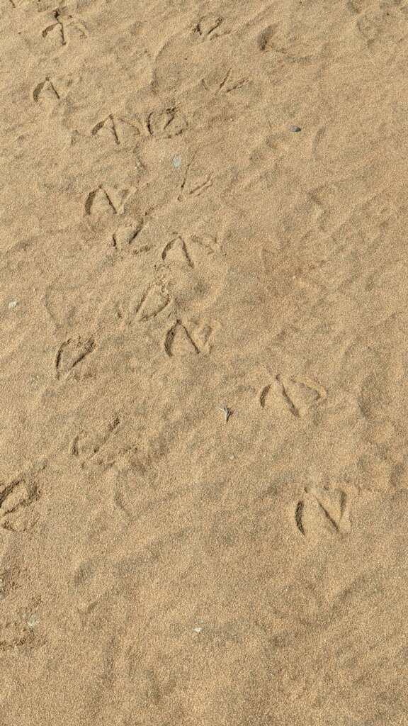 Bird tracks in sand.