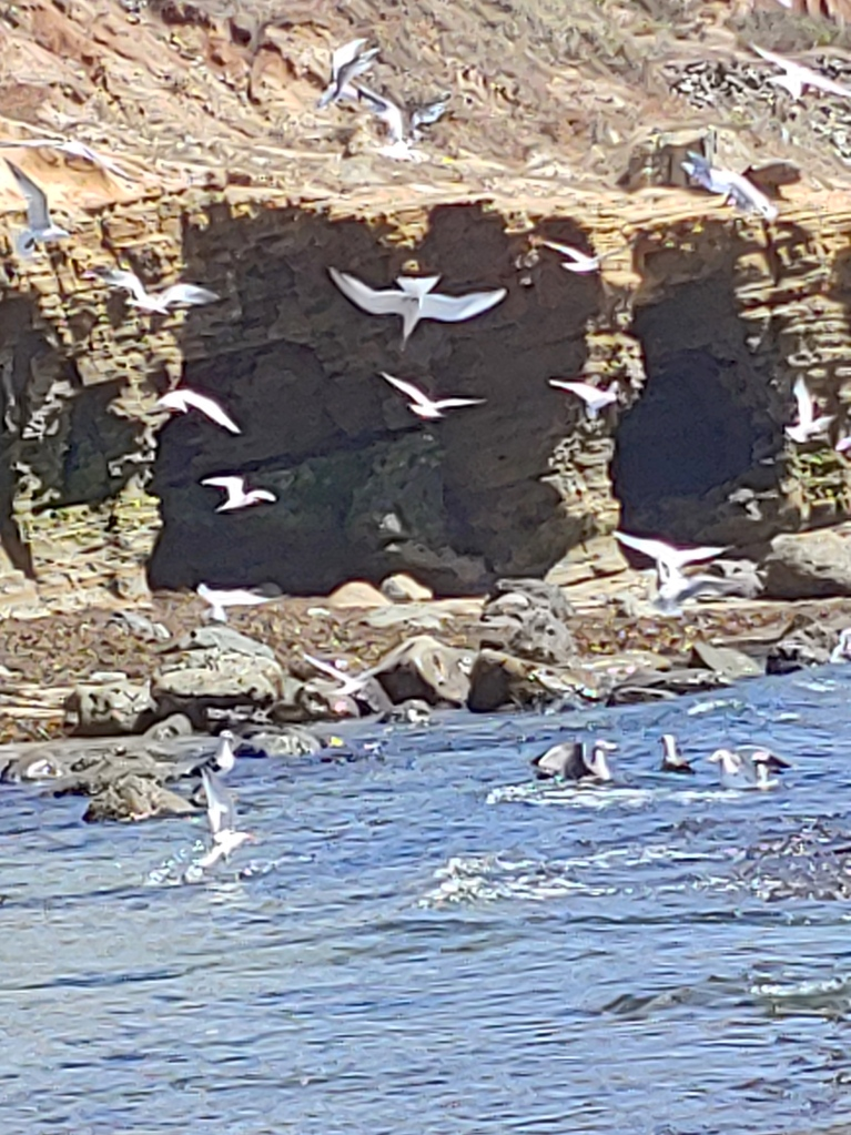 White birds fly among rocky cliffs at the ocean.