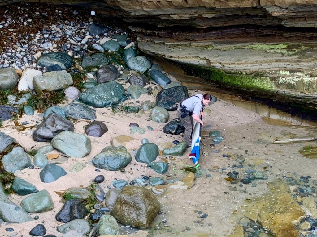 A woman picks up a surfboard along a rocky coast.