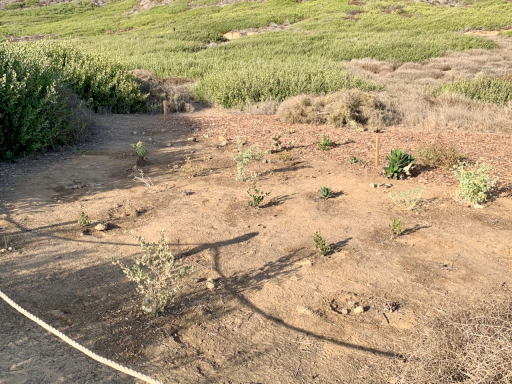 Small bushes in dirt with a rope barrier in the foreground.