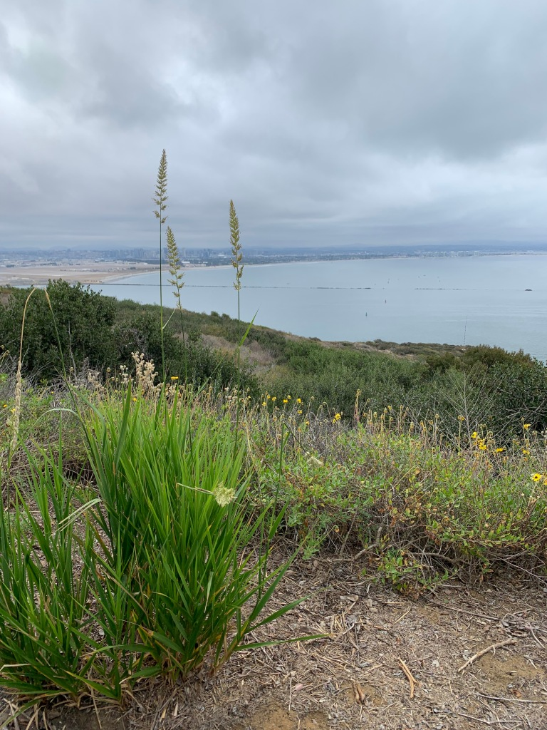 Low green bushes on a hillside overlooking the ocean with gray clouds overhead.